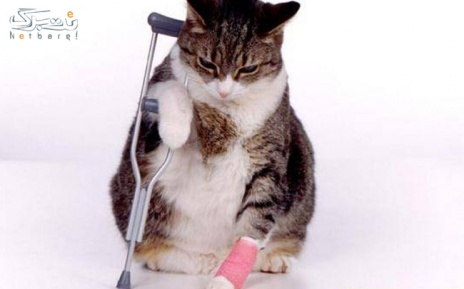 وزن گیری حیوانات خانگی در دامپزشکی آرا