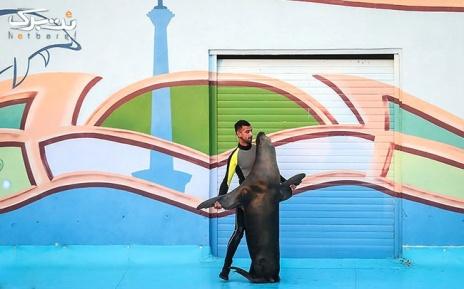 دلفیناریوم جمعه 30 خرداد