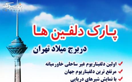 دلفیناریوم پنج شنبه 29 خرداد