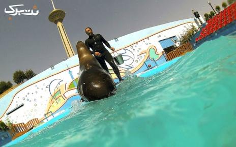 سه شنبه 10 تیر: شیرهای دریایی در دلفیناریوم