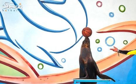 پنج شنبه 12 تیر: شیرهای دریایی در دلفیناریوم