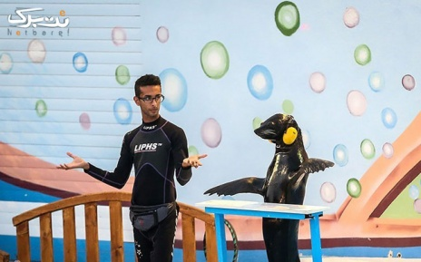 جمعه 13 تیر: شیرهای دریایی در دلفیناریوم