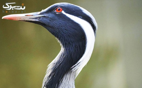 بازدید تخصصی با آوایار در باغ پرندگان پکیج دو نفره