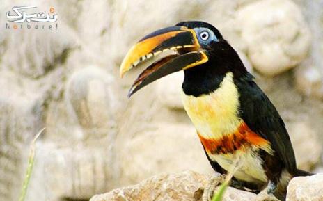 بازدید تخصصی با آوایار در باغ پرندگان پکیج4نفره