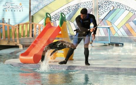 روز جمعه 3 بهمن: نمایش شیرهای دریایی در دلفیناریوم