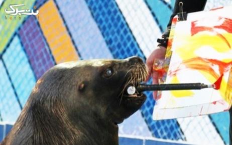 روز پنجشنبه و جمعه :  نمایش شیرهای دریایی در دلفیناریوم
