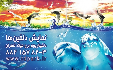 اجرای حیرت انگیز دلفین ها دوشنبه 7 دی
