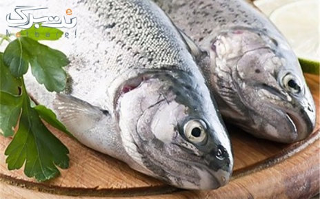 پکیج 4 : کولی یا فیله گوشتی صید روز خلیج فارس