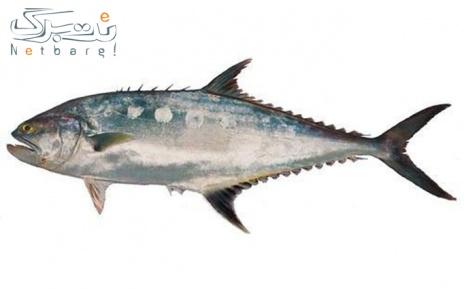 پکیج 1: ماهی شیر بندر صید روز خلیج فارس