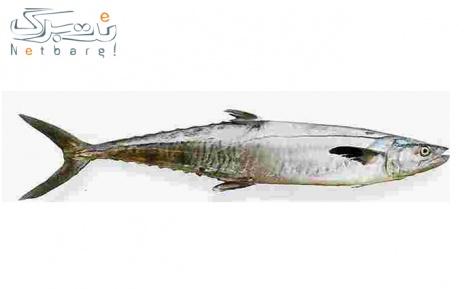 پکیج 3: ماهی شیر اصل صید روز خلیج فارس