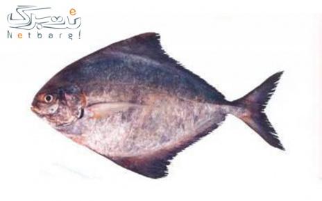 پکیج 4: ماهی حلوا سیاه صید روز خلیج فارس