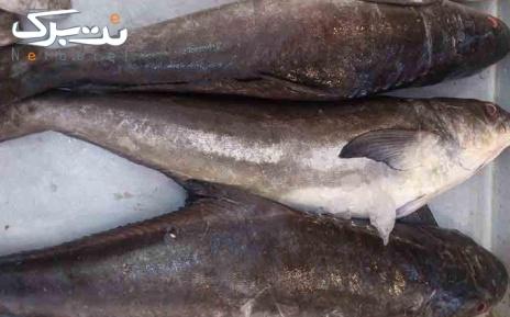 پکیج 5: ماهی سکن یا سه کله صید روز خلیج فارس