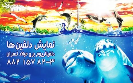 دلفیناریوم برج میلاد یکشنبه 4 تیرماه ساعت 19:30
