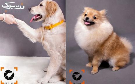 یک قطعه عکس 21*16 در آتلیه مخصوص حیوانات petax