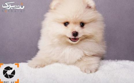 یک قطعه عکس 25*20 در آتلیه مخصوص حیوانات petax