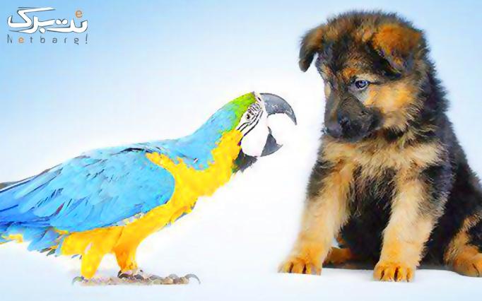 سلامت حبوانات خانگی در دامپزشکی آرا