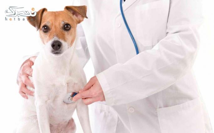 ویزیت انواع حیوانات در درمانگاه دامپزشکی فردیس