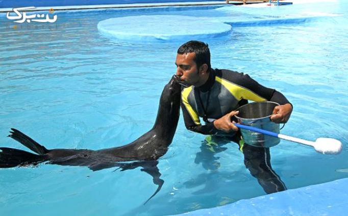 نمایش شیر دریایی در دلفیناریوم با حامد مهدوی