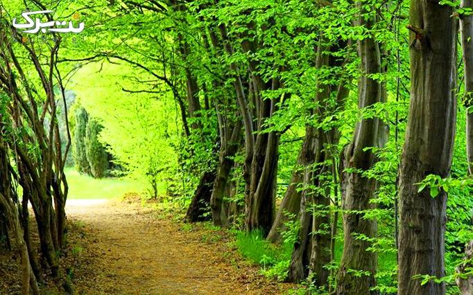 تور یک روزه جنگل و ساحل گیسوم