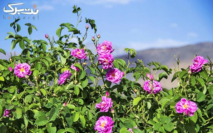 تور  یک روزه مهد گلاب ایران روستای برزک کاشان