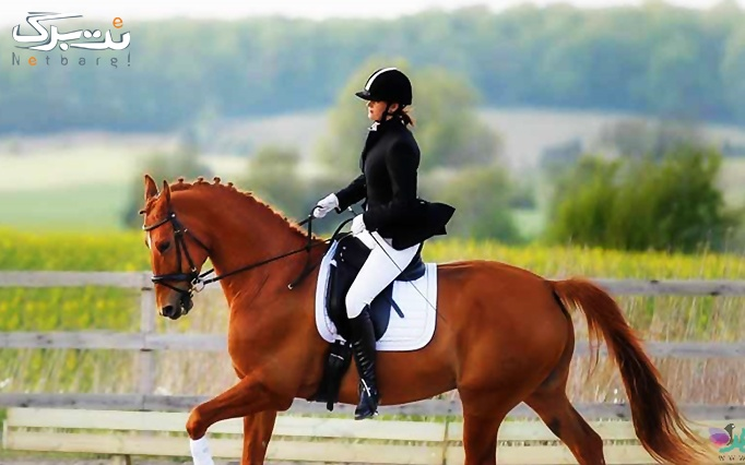 ویژه روز دختر: بیلیارد در مرکز اسب سواری آراد