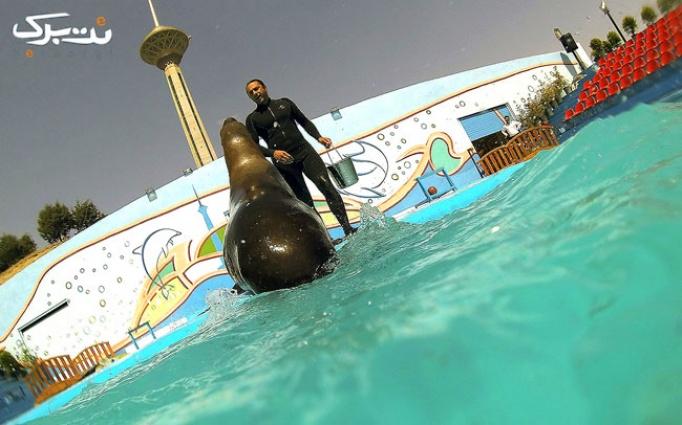 شیرهای دریایی در دلفیناریوم