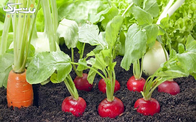 کارگاه آموزش سبزیکاری در گیاه دانه