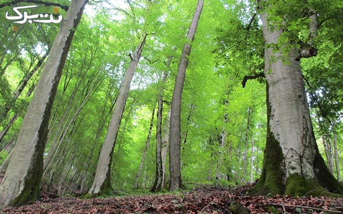 تور1 روزه جنگل ارواح دور و نزدیک