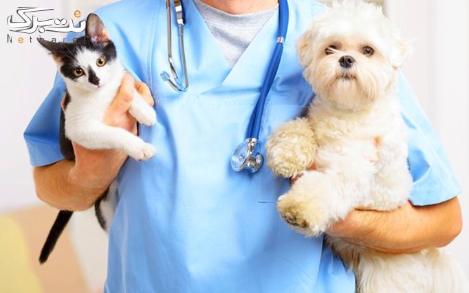 دستمزد واکسیناسیون حیوانات در درمانگاه دام کوچک