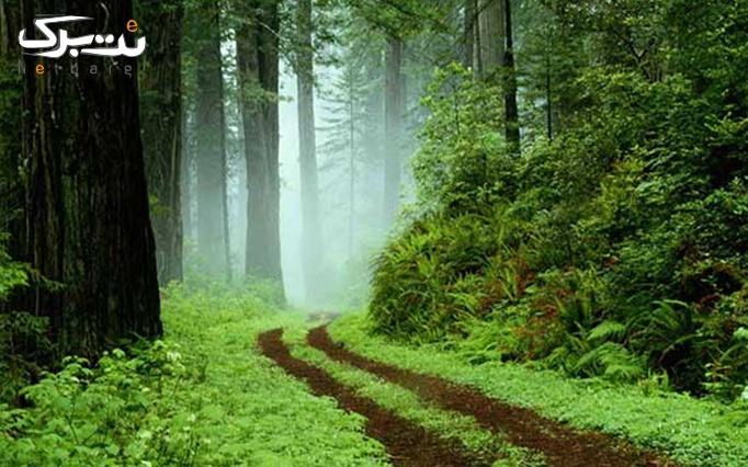 تور یک روزه مرداب سراوان و جنگل سراوان