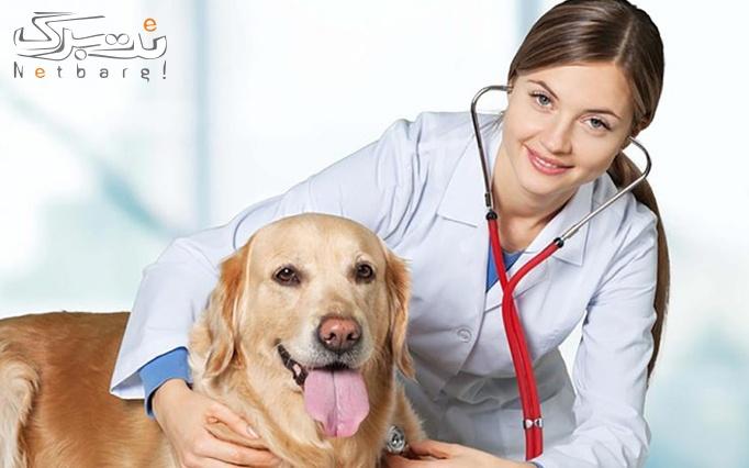سلامتی حیوانات خانگی در دامپزشکی راد