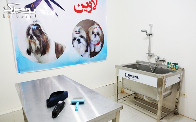 ویزیت انواع حیوانات خانگی در دامپزشکی لاوین