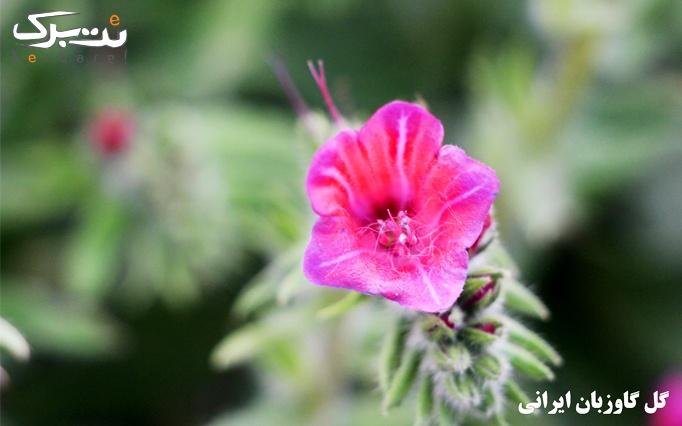 همایش آشنایی با گیاهان دارویی در گیاه دانه