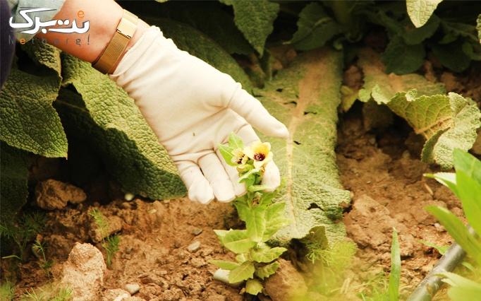 آشنایی با گیاهان دارویی در آموزشگاه گیاه دانه