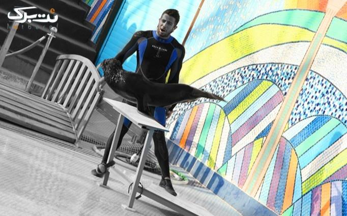 نمایش شیر دریایی در دلفیناریوم
