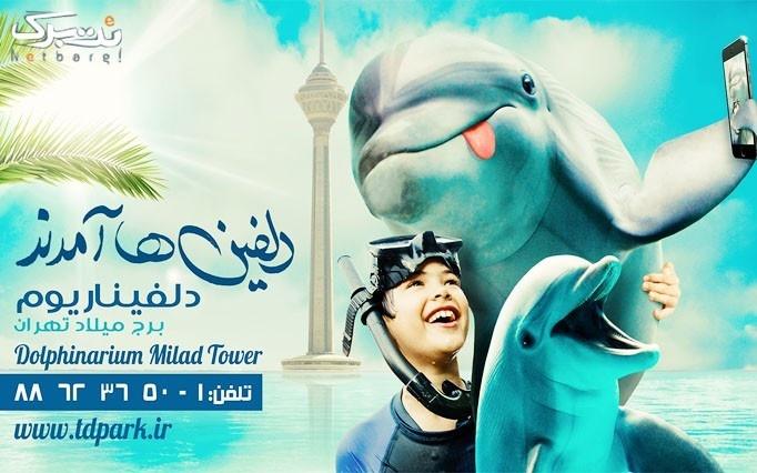 اجرای حیرت انگیز دلفین ها در فصل بهار