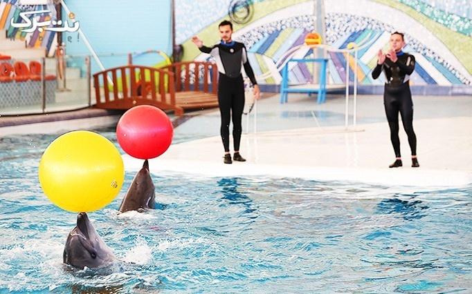 اجرای حیرت انگیز دلفین ها به مناسبت عید فطر