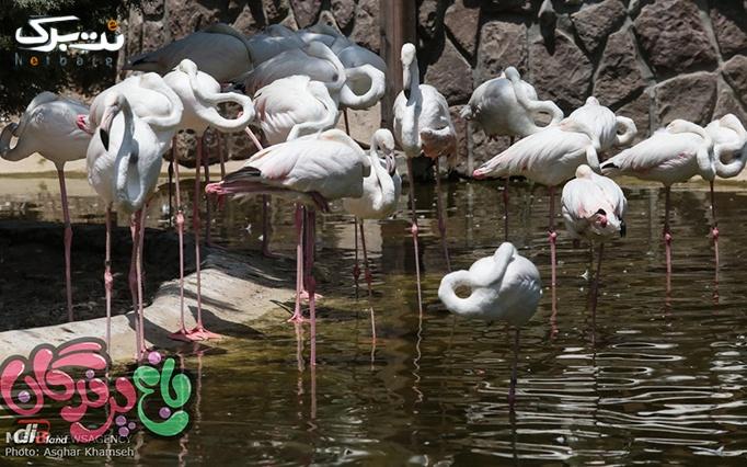 جشن تولد درنا با پذیرایی کامل در باغ پرندگان