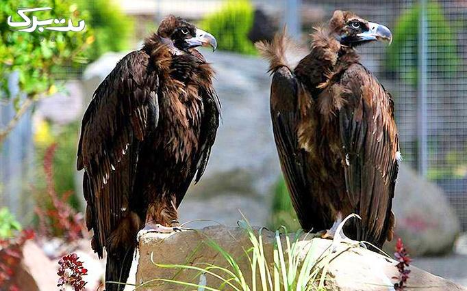 جشن نجات ملکه دال در باغ پرندگان
