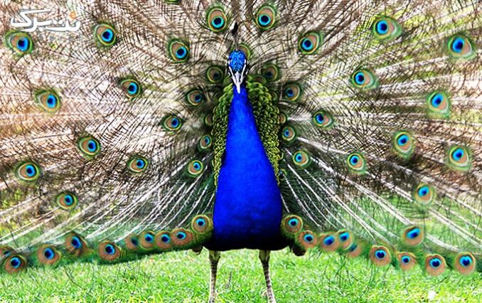 گردش خاطره انگیز در باغ پرندگان