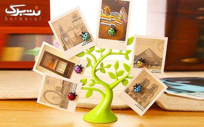 درختچه مگنتی از فروشگاه آروگو 2
