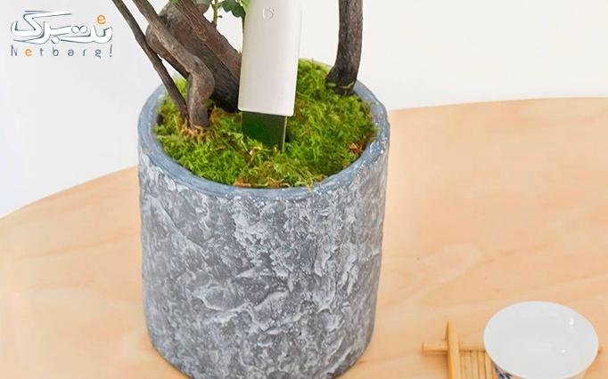 جشنواره محصولات شیائومی:  سنسور نظارت بر گل و گیاه شیائومی از تامین کالای نت برگ
