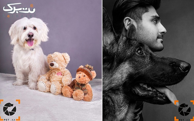 آتلیه مخصوص حیوانات petax