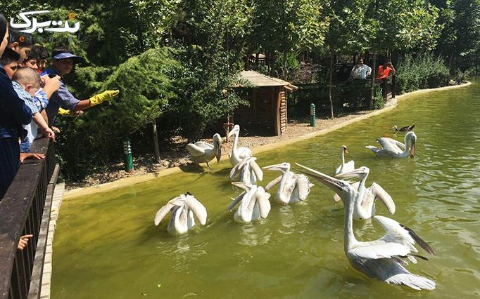 پکیج های استثنایی از باغ پرندگان