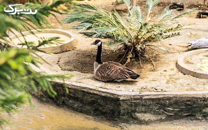 بلیط ورودی باغ پرندگان