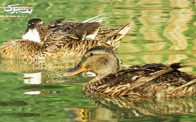3 عدد بلیط ورودی باغ پرندگان
