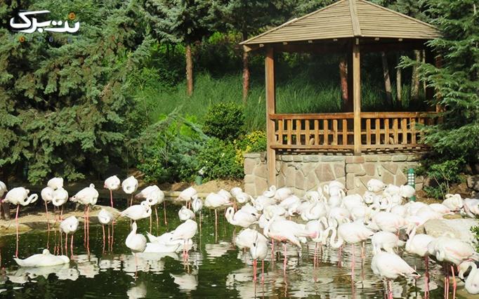 3 عدد بلیط ورودی باغ پرندگان + بن خرید صبحانه