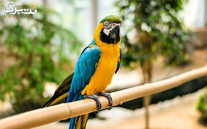 3 عدد بلیط ورودی باغ پرندگان + بن خرید از هوبره