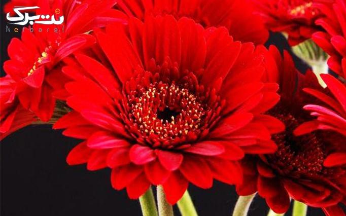 ده شاخه گل ژربرا در گل فروشی من و تو