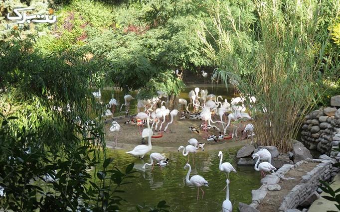 جشن بزرگ یلدا در فست فود سلین باغ پرندگان تهران